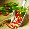 Red Bird's Eye Chilli